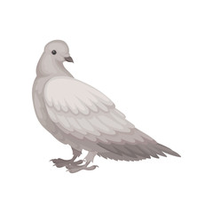 Flat vector icon of gray dove, side view. Bird with small head and short legs. Wild feathered animal
