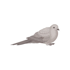Flat vector icon of sitting dove. Bird with small head, short legs and gray feathers. Wildlife and fauna theme