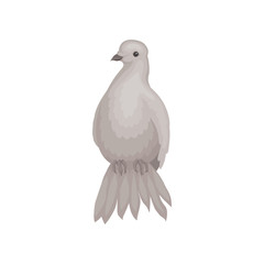 Gray dove with fluffy tail. Bird with small head and short legs. Wild feathered animal. Flat vector design
