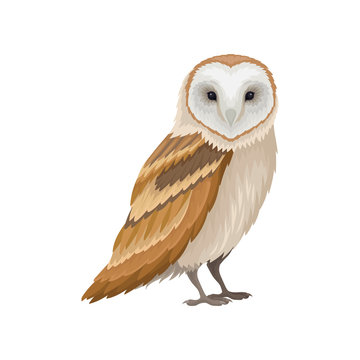 Barn owl with white face and brown wings, side view. Wild forest bird. Ornithology theme. Flat vector icon