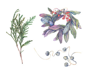 Watercolor hand drawn illustration. Christmas winter theme. Set of christmas elements with flower and berries. Holiday greeting card.
