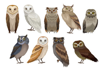 Aluminium Prints Owls cartoon Flat vector set of different species of owls. Wild forest birds. Flying creatures. Elements for ornithology book