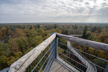 A Treetop Path over the Trees