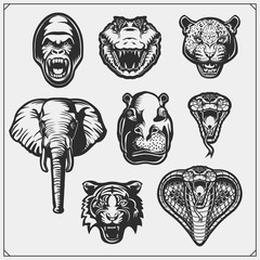 Set of wild animals. Animals desert, africa and jungle.