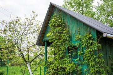 Fototapeta Zielony domek pokryty zielenią obraz