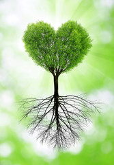 Green tree in the shape heart with a roots.