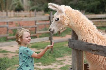 Petit garçon donne à manger à lama dans sa main