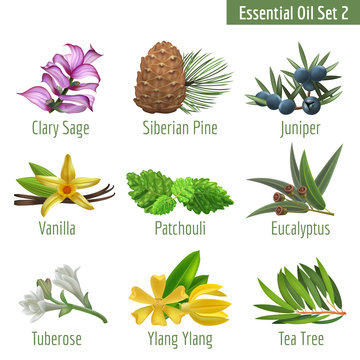 Essential Oil Set in a Realstic Style