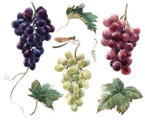 Fototapeta Watercolor grape set