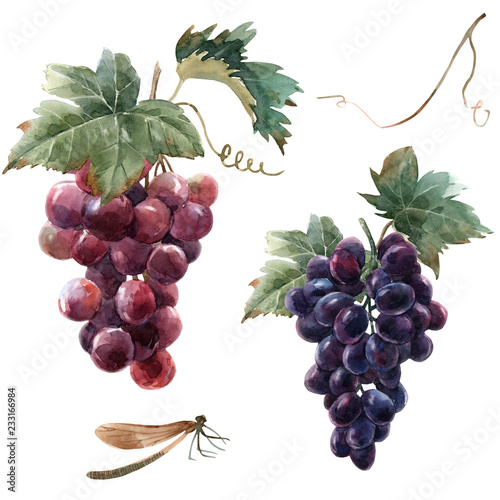 Fototapete Watercolor grape set