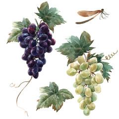 Fototapete - Watercolor grape set