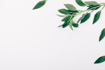Flat lay side frame of fresh leaves, copy space
