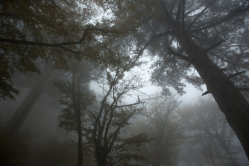 Trees in the fog in the autumn forest