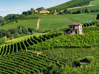 Vineyards near Barolo, Cuneo, in Langhe