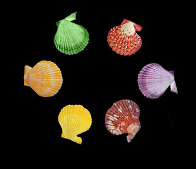 Close up of  seashells