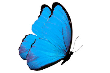 beautiful сolor butterfly isolated on white background