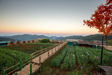 Sunrise Landscape nature of golden mountain by Mexican sunflower field name Tung Bua Tong in Maehongson (Mae Hong Son),Thailand.