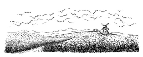 rural field with ripe wheat on background of mill, village and clouds. vector illustration