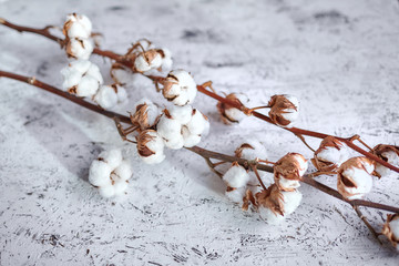 Two dry branches of white cotton flowers lying  on a wooden table