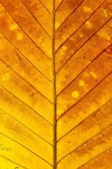Fototapete - Colorful autumn leaf texture