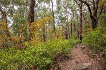 Walking trail in Wilsons Promontory national park, Victoria, Australia