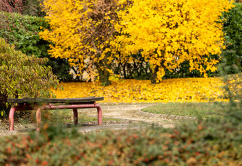 Autumn. Bench. Park. Yellow. Colors
