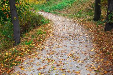 pathway in beautiful autumn park