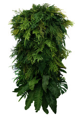 Wall Mural - Tropical leaves foliage plant bush floral arrangement, vertical green wall nature backdrop isolated on white background with clipping path.
