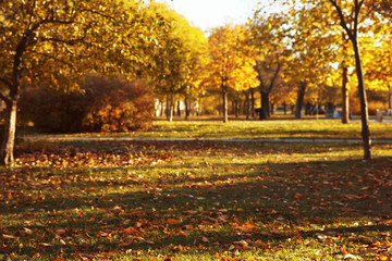 Blurred view of beautiful autumn park with fallen leaves on ground