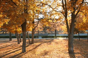 Beautiful autumn city park with fallen leaves on ground