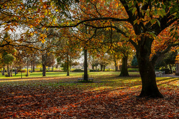 Autumnal scene in a park in Frome, Somerset