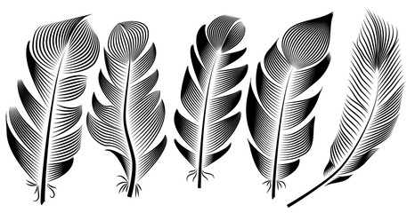 Collection of feather illustration, drawing, engraving, ink, line art,