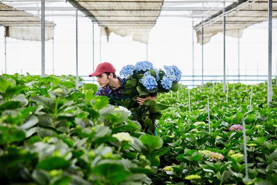 Florist Examining Plants While Holding Hydrangeas