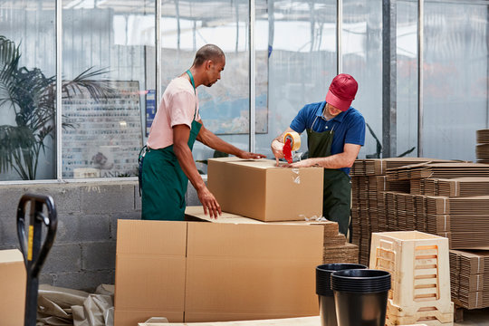 Workers Packing Cardboard Box In Greenhouse