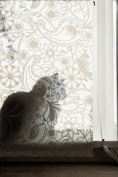 silhouette of cat behind window behind