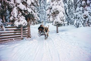 Man Reindeer sleigh in Finland in Lapland winter