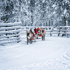 Racing on Reindeer sleigh in Finland