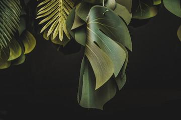 Piante e foglie decorative