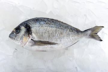 Fresh dorada fish on the ice