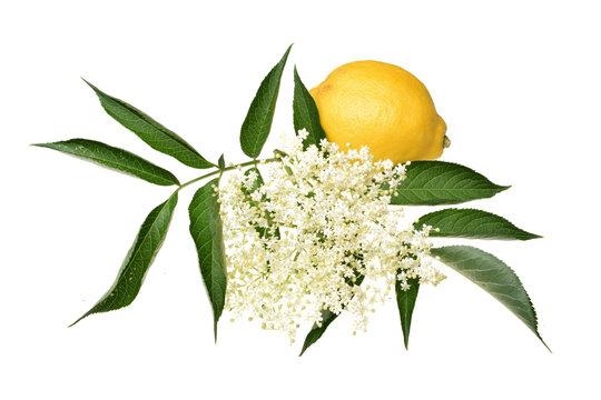 Elderflower with lemon and leaves isolated
