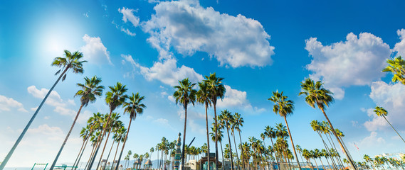 Foto op Canvas Palm boom Tall palm trees in Venice Beach in Los Angeles