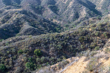 Fall morning in the dry forest of Southern California