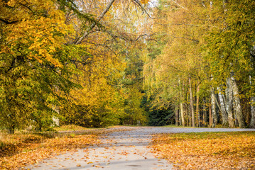 Autumn landscape. Colorful trees in the park on a sunny day. Riga, Latvia