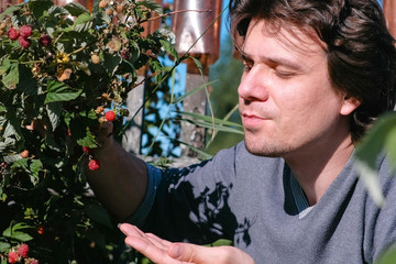 Young brunet man eats raspberries, tearing it from the bushes in the country.