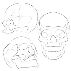 Skull Vector illustration, Collection Of Hand Drawn Skulls, Hard Core Skull Vector Art. Sketch Style