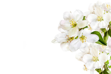 Floral wallpaper, greeting card, white flowers blossom