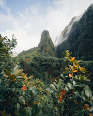 Lush plants in rocky mountains, Maui