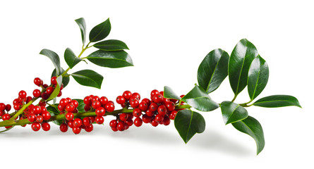 Christmas holly isolated on white background