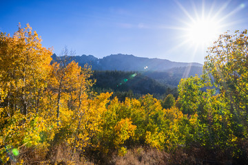 Colorful aspen trees on a sunny day; Eastern Sierra mountains, California