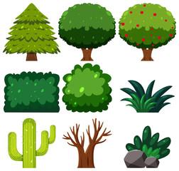 Set of green plant